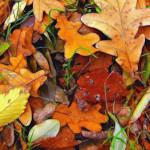 秋のファンデーションの選び方
