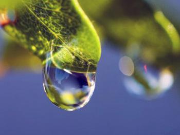 葉から落ちる滴